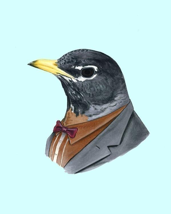 Berkley illustration robin.