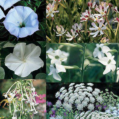 flowers moon select chardonnay