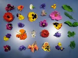 excellent, detailed series of edible flower posts via eattheweeds.com