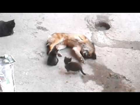 Mother Cat Brings Her Kittens to Meet an Old Friend - We Love Cats and Kittens
