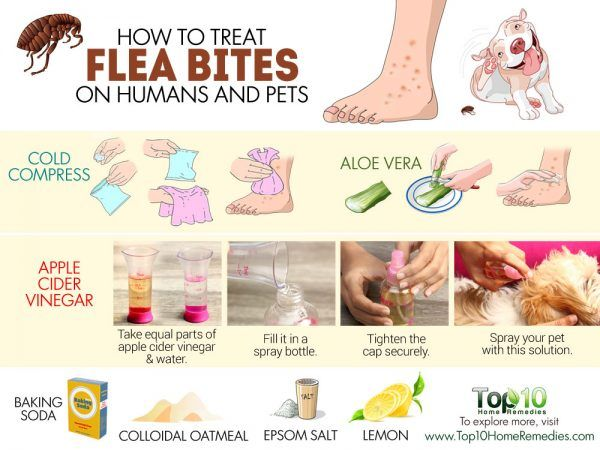 Homemade Flea Bite Treatment For Dogs