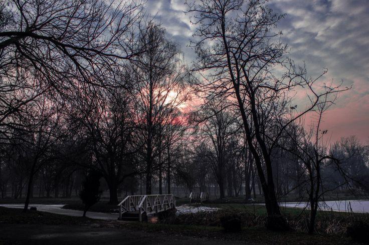 Dawn at the park
