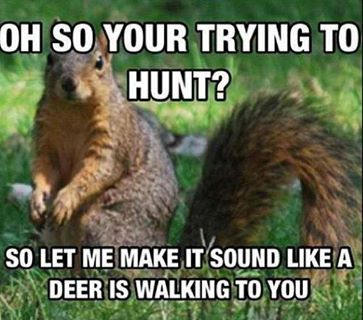 My lil squirrel gets a nutt - 1 1