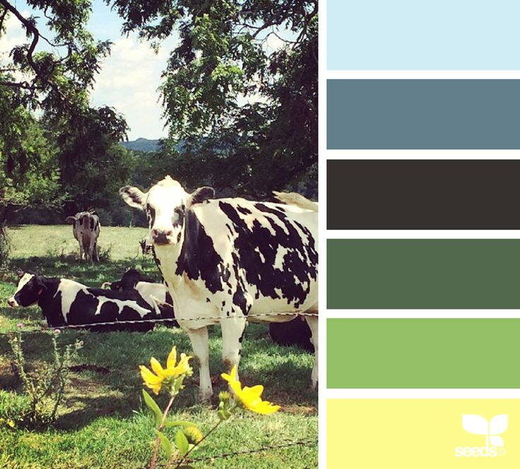 color pasture | design seeds // Yellow kitchen, green couch, blue accent in kitchen and living room.