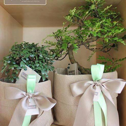 Così belli e raffinati non ce n'è... un classico della #lineagreen   di #Bombonviva  Bomboniera Naturale e solidale Bonsai