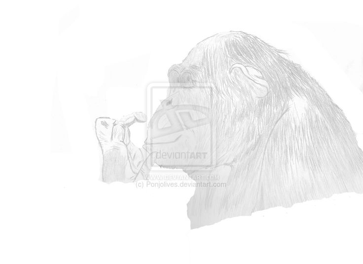 Chimpanzee by Ponjolives.deviantart.com on @DeviantArt