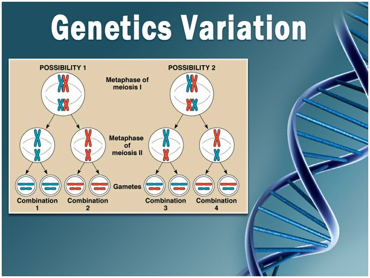 21 best other medical templates images on pinterest medical ppt various topics are available in these genetics powerpoint slide templates with powerpoint background and themes in various designs colors and images toneelgroepblik Image collections