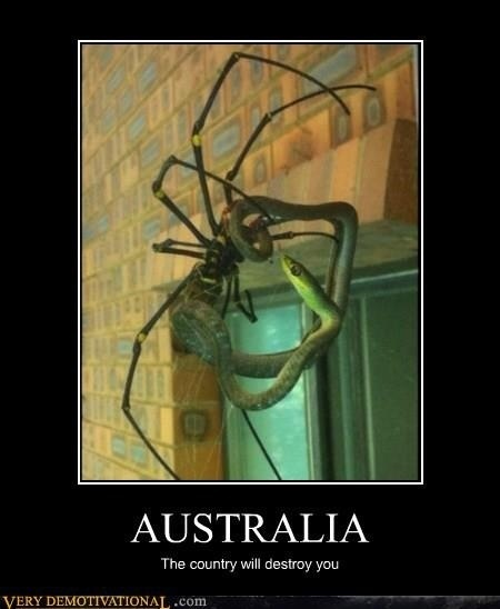 scary animal stuff @Sara Pope would die if she saw the spider heheh lol :3