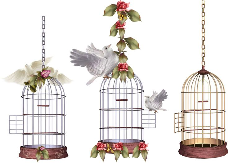bird cage images