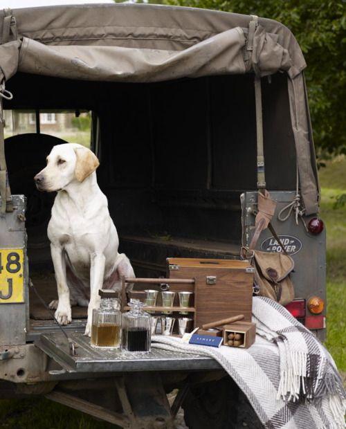 defender, dog and whisky