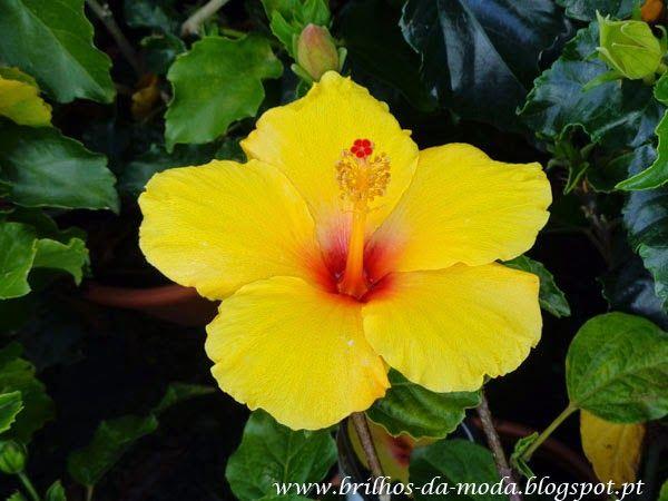 Brilhos da Moda: Flores, uma maravilha da natureza # 38