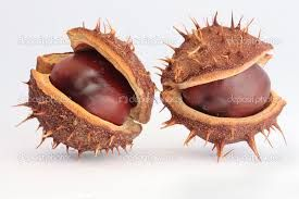 Image result for seed pods