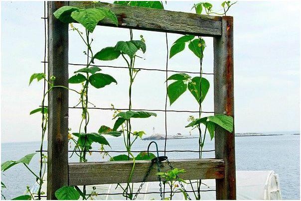 Los cultivos en vertical aunque se han puesto muy de moda en los últimos años tienen mucho más recorrido del que pensamos. Sin ir más lejos sólo hay que acordarse de los jardines colgantes de Babil…