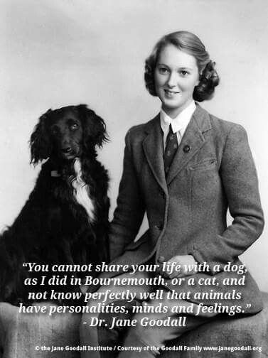 """You cannot share your life with a dog as I did in Bournemouth, or a cat, and not know perfectly well that animals have personalities, minds, and feelings""   ----  Jane Goodall"
