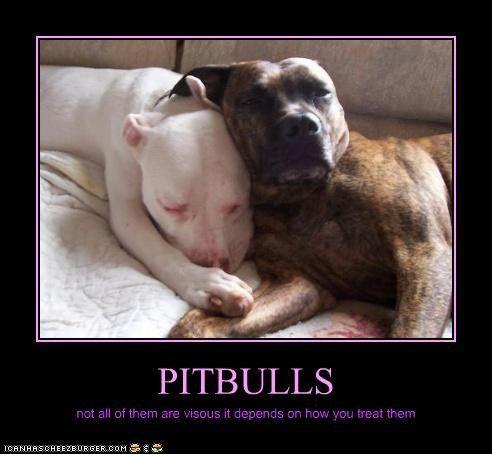PITBULLS   Funny pitbull, Pitbull pictures and Pit bull