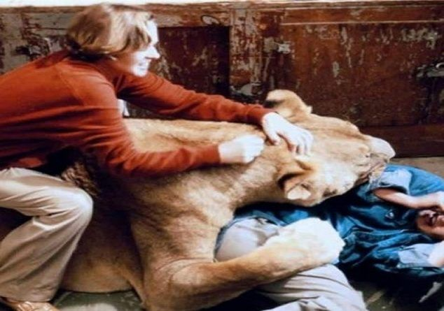 «Roar». Η πιο αιματηρή ταινία στην ιστορία του κινηματογράφου.
