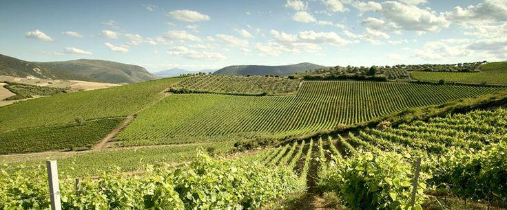 TRAVEL'IN GREECE I Wine, #travelingreece