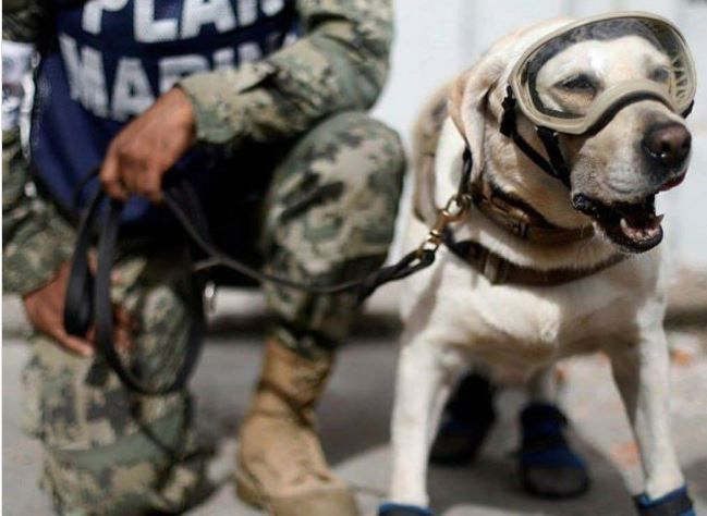 Search and rescue dog Frida has become an online hero after saving more than 50 people so far, including 12 after Mexico\u0027s earthquake.