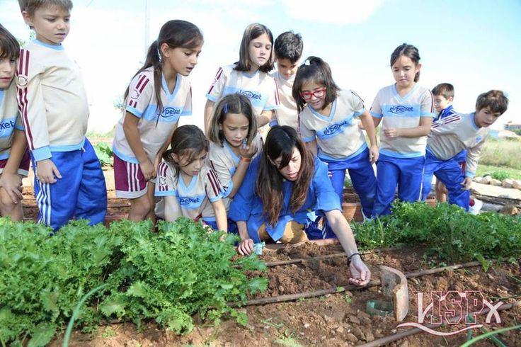 Los alumnos de #PrimariaISP realizan visitas semanales al #huertoecológicoISP.  www.colegiosisp.com