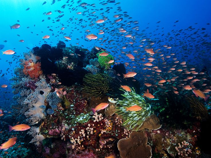 Komodo National Park, Indonesia | Picture of teeming reef in Komodo, Indonesia
