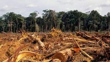 Petition · Ministry of Environment and Forestry Republic Indonesia: Save Forests Indonesia! #savethetrees · Change.org