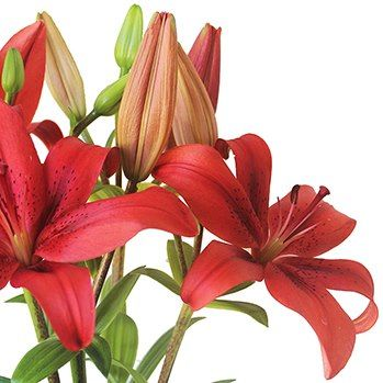 Red lilies for delivery Australia-wide