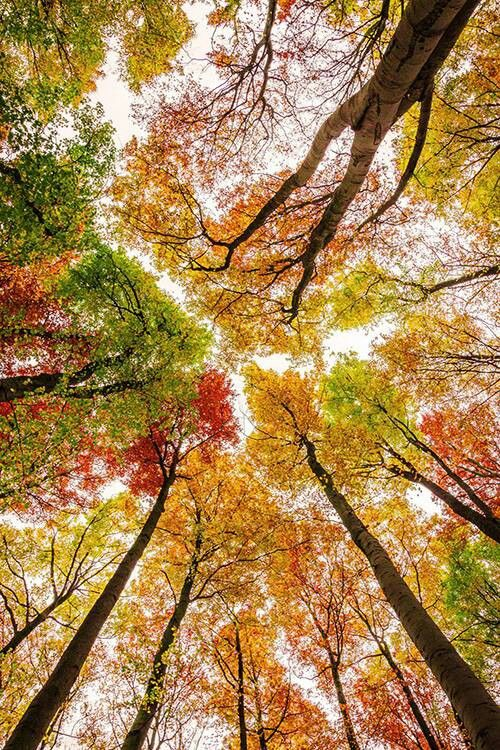 Beauty of nature, colored trees.