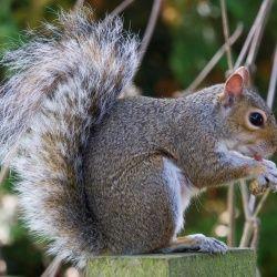 Amazing squirrel memory!