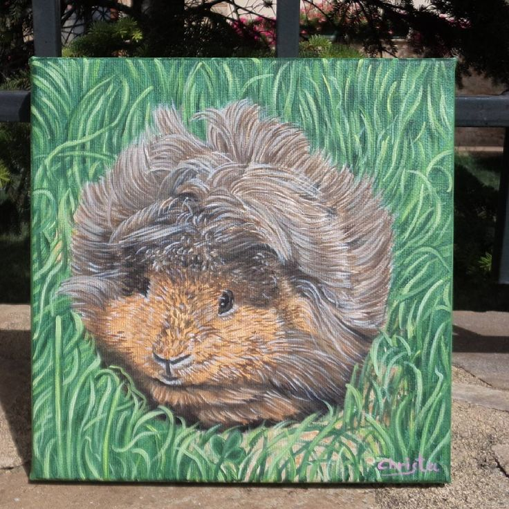 """249 Likes, 3 Comments - Christa (@oilpaintingschrista) on Instagram: """"Custom order Guinea pig Oil painting #oilpaintingschrista #oilpainting #guinea #guineapig #animals…"""""""