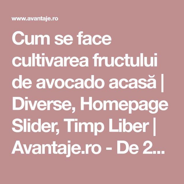 Cum se face cultivarea fructului de avocado acasă   Diverse, Homepage Slider, Timp Liber   Avantaje.ro - De 20 de ani pretuieste femei ca tine