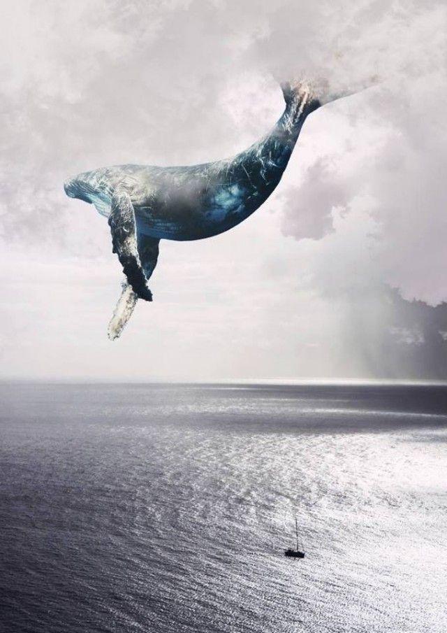 киты в небе картинки высокого разрешения бананы кожуры нарежьте