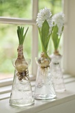 vases: Ideas, Spring Flowers, Hyacinth Vase, Three Hyacinth, Hyacinth Bulbs, Vases, Plants, Gardens, Bulbs Vase