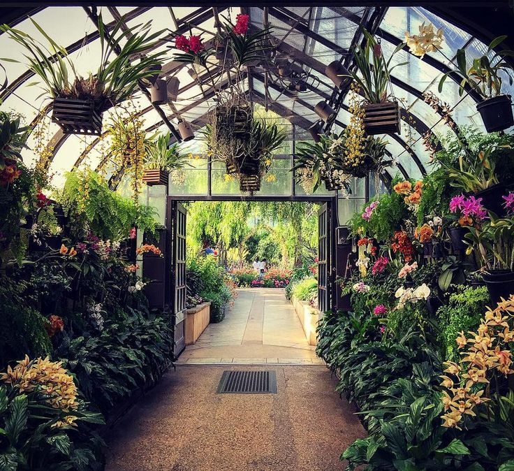 Conservatory @longwoodgarden #flowerphotography #spring2016 #springbloom #pennsylvaniaphotographer #pennsylvania #philadelphia #philadephiagardens #unitedstates #iphone6plusphotography