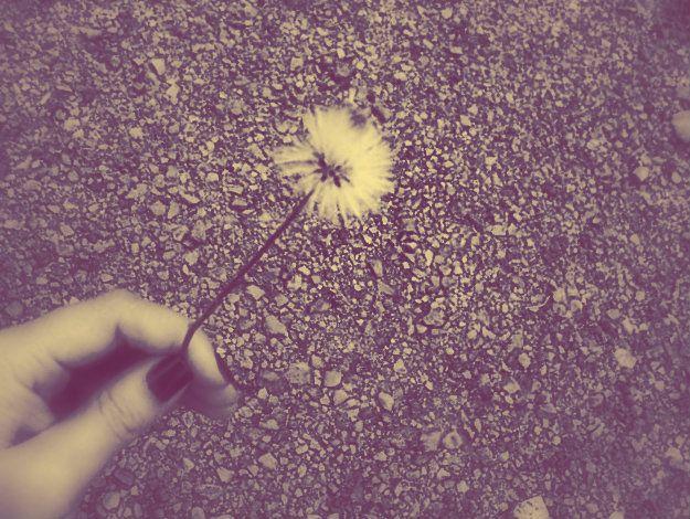 #Dandelios No quiero hablar lo necesario. No quiero que al principio sea todo y luego solo algo. No quiero esperar a que sea el tiempo, quiero hacer el tiempo. No quiero que me oigan, quiero que me escuchen. No quiero irme, quiero estar. No quiero preguntas, quiero respuestas.