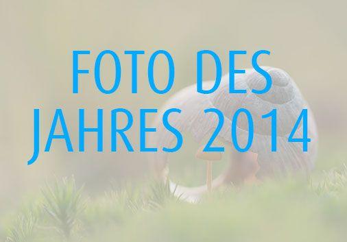 Hier findet ihr eine aswahl der schönsten Einsendungen zum Foto des Jahres bei Pixum und natürlich die Gewinner https://www.pinterest.com/pixum/foto-des-jahres-2014/