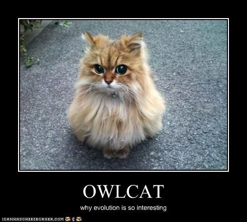 OWLCAT. Is it an owl? Is it a cat?!