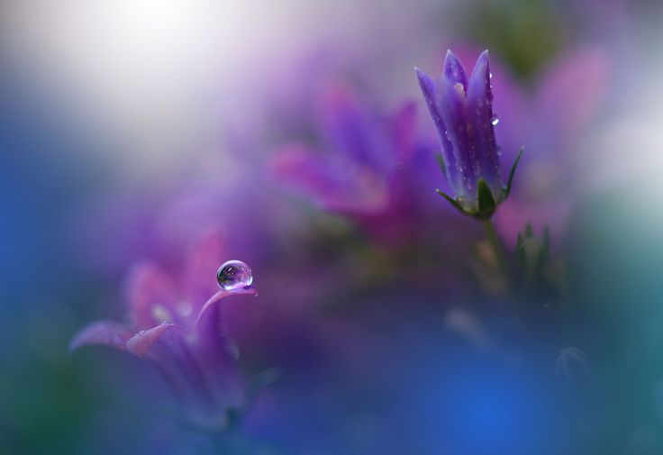 ~*~*~o~*~*~ by Juliana Nan on 500px