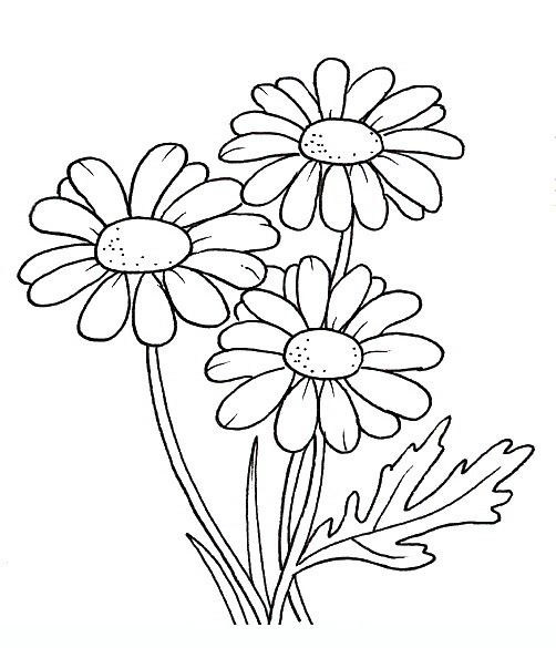 margherita disegni da colorare per adulti e ragazzi