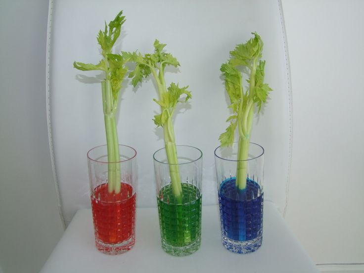 strip celery science project jpg 1200x900