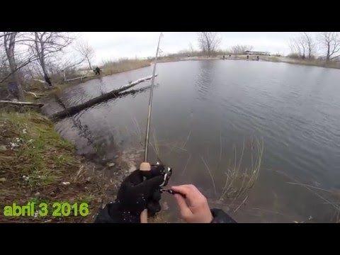 How to catch trout/pesca de la trucha en Chicago Illinois - (More info on: https://1-W-W.COM/fishing/how-to-catch-troutpesca-de-la-trucha-en-chicago-illinois/)