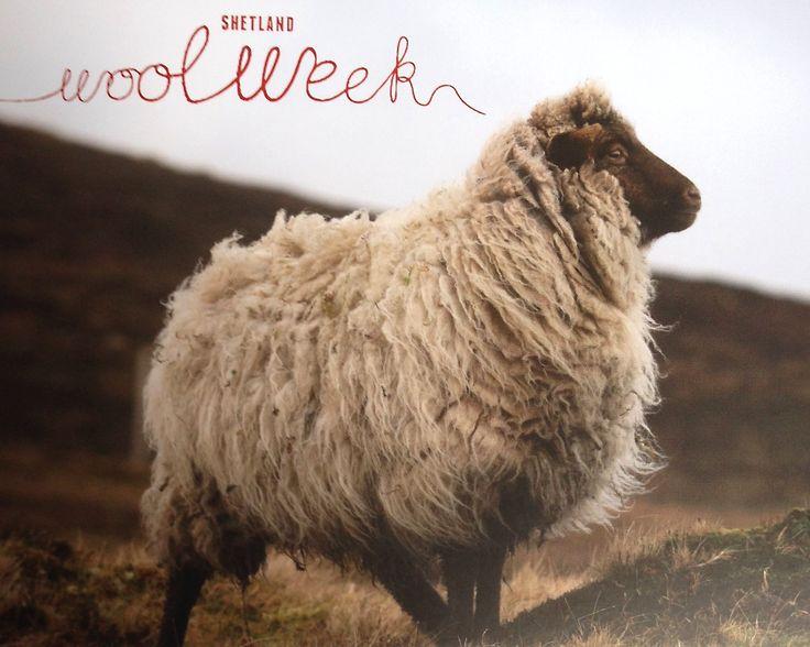 15 best Shetland Wool Week images on Pinterest   Shetland ...