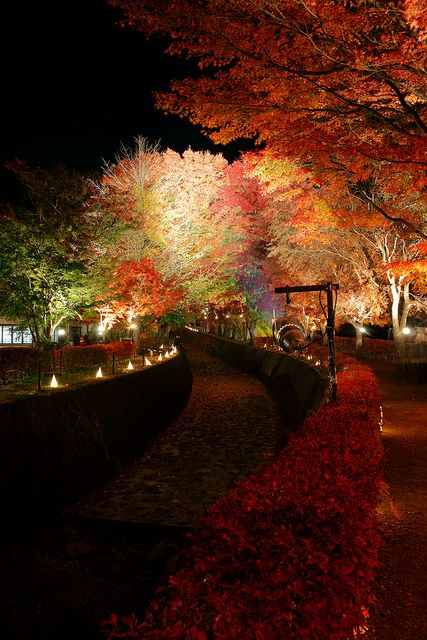 Lake Kawaguchi Autumn Festival, Japan (by peaceful-jp-scenery). I've always wanted to see Autumn.. we never get to really see it in southern california