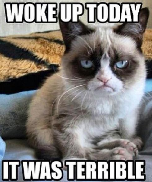 Grumpy cat after waking up #GrumpyCat #Memes