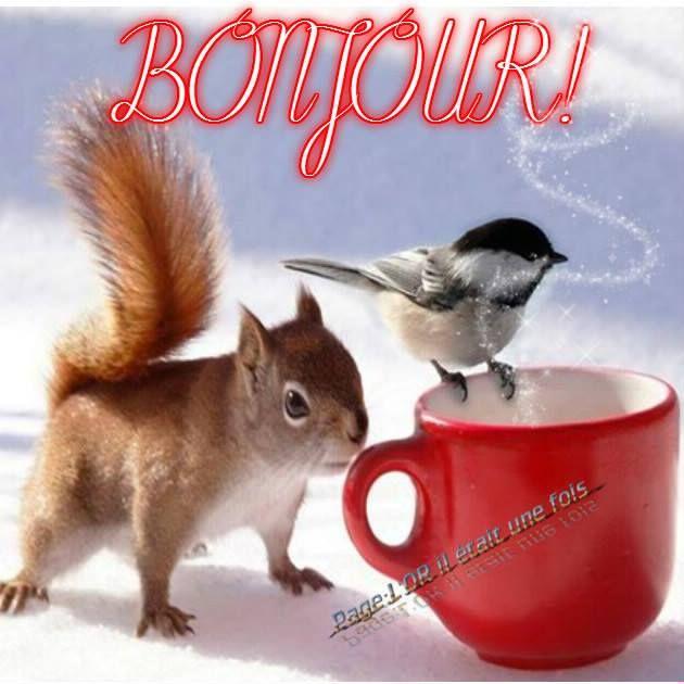 Bonjour ! #bonjour cafe ecureuil oiseau mesange | Good morning, Bonjour, Messages