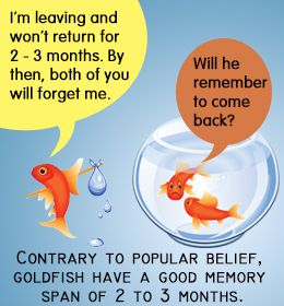 Goldfish interesting facts about and goldfish care on for Fun fish facts