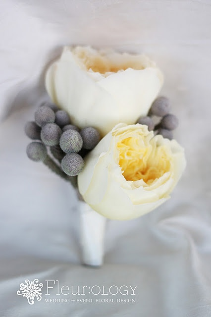 David Austin garden rose & silver brunia berry boutonniere // eep, I'm definitely thinking of gray for a December color . . .