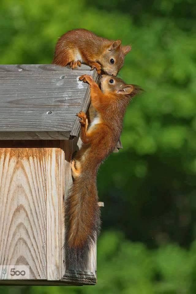 """Bottom Squirrel: """"Silas dear, I think this will make an ideal home for us!  And the location is perfect!"""""""