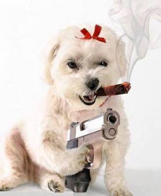 #animals #humor #funny #lol