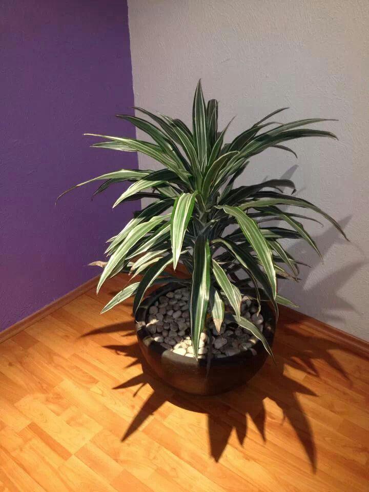 Mejores 89 im genes de casa feng shui en pinterest for Plantas entrada casa segun feng shui