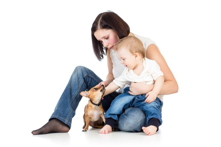 This article offers some simple and practical advice on how to keep your home environment safe for children if you live with a dog.